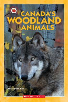 Canada Close Up: Canada's Woodland Animals