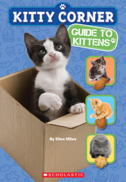 Kitty Corner: Guide to Kittens