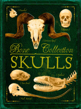 Bone Collection: Skulls