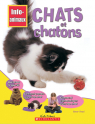 Info-animaux : Chats et chatons