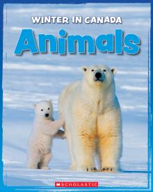 Winter in Canada: Animals