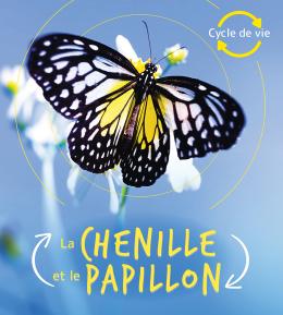 Cycle de vie : La chenille et le papillon