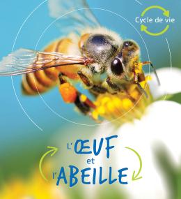 Cycle de vie : L'œuf et l'abeille