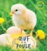Cycle de vie : L'œuf et la poule