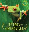 Cycle de vie : Le têtard et la grenouille